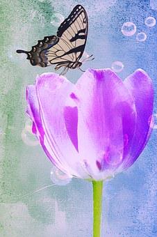 tulip-669158__340